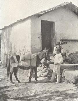 burro de carga e criança